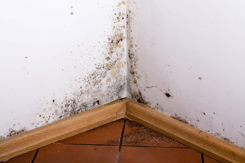 Infiltrazioni: il condominio è tenuto a risarcire il danno ...